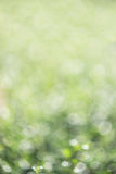 Bokeh naturel, bokeh brouillé Photographie stock