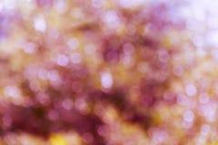 Bokeh naturel coloré d'étincelle et de coup avec la lumière du soleil dans le rose à Image stock