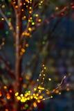 Bokeh nos ramos sobre o fundo escuro Imagem de Stock