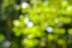 Bokeh od drzewa Obraz Stock