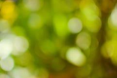 Bokeh od drzewa Zdjęcia Royalty Free