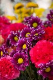 Bokeh Photo of Purple, Pink, and Yellow Flowers Royalty Free Stock Photo
