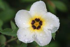 Bokeh Photo of White Flower Stock Photo