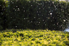 Bokeh rain falling on leaves. royalty free stock photo