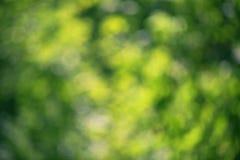 Bokeh sappige groene bladeren stock foto's