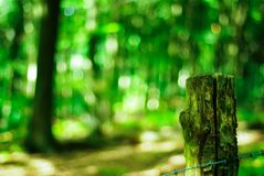 Bokeh shot in the forest stock photography