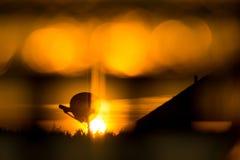 Bokeh solnedgång Royaltyfria Bilder