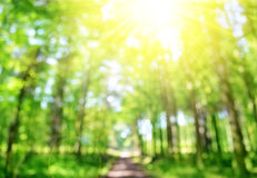 Bokeh in the spring forest with sunshine. Stock Photography