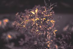 Bokeh stylu natury tapeta Cyraneczka koloru pluśnięcia tło obraz stock