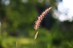 Bokeh su luce solare e su verde archivati con erba su fondo fotografie stock