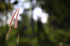 Bokeh su luce solare e su verde archivati con erba su fondo fotografia stock