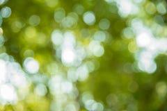 Bokeh suddighet från naturligt träd Fotografering för Bildbyråer