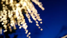 Bokeh sur les branches Photo stock