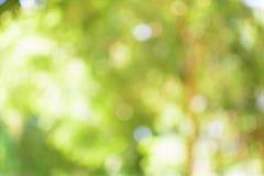 Bokeh tło drzewni liście Obraz Royalty Free