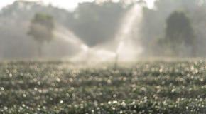 Bokeh vago della foto dello spruzzatore dell'acqua nel campo del tè Fotografie Stock Libere da Diritti