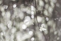 Bokeh van grijze kleurenbladeren als achtergrond het onduidelijke beeld van de nadruklens Royalty-vrije Stock Afbeelding