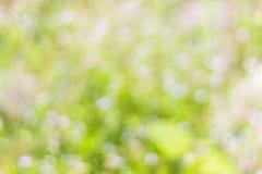 Bokeh verde Fotografia Stock