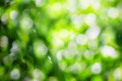 Bokeh verde Imagenes de archivo