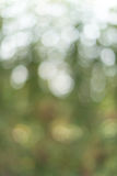 Bokeh verde da folha como a textura do fundo Foto de Stock Royalty Free