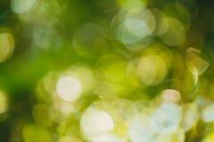 Bokeh verde dal fondo del fuoco dalla foresta della natura fotografia stock libera da diritti