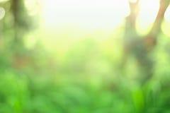 Bokeh verde dall'albero, fondo Immagini Stock