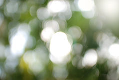 Bokeh verde de la hoja Fotografía de archivo libre de regalías