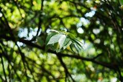 Bokeh verde de la naturaleza del árbol Foto de archivo libre de regalías