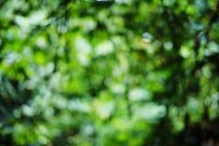 Bokeh verde de la naturaleza del árbol Fotografía de archivo