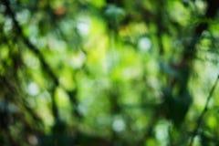 Bokeh verde de la naturaleza del árbol Imagen de archivo