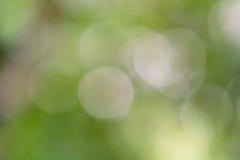Bokeh verde de las hojas de la falta de definición Foto de archivo libre de regalías