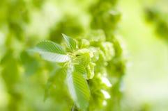 Bokeh verde fresco no parque fotografia de stock