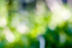 Bokeh verde vago Fotografie Stock