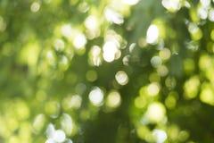 Bokeh vert Photos stock