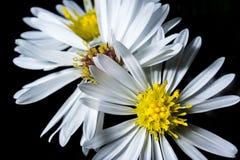 Bokeh von Blumen stockfoto