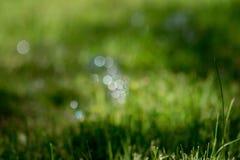 Bokeh w trawie Obraz Royalty Free