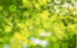 Bokeh in the woods Royalty Free Stock Photography