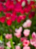 Bokeh zamazany kwiaty obraz stock