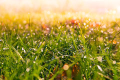 Bokehed grass 2 Royalty Free Stock Photography