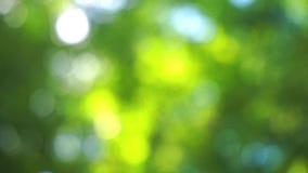 Bokehzonlicht die door bladeren glanzen stock videobeelden