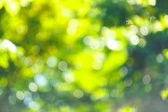 Bokhe da árvore Fotografia de Stock Royalty Free