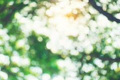 Bokhe dell'albero Fotografie Stock