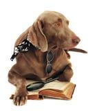 bokhund arkivbilder