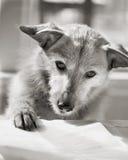 bokhundavläsning Arkivbild