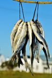 Bokkoms secó pescados Foto de archivo