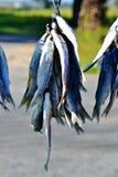 Bokkoms secó pescados Fotos de archivo