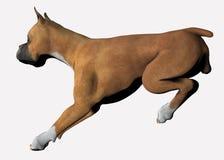 Bokser - 03 Stock Illustratie