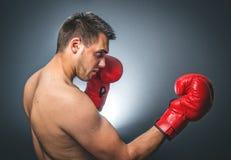 bokser fotografia royalty free