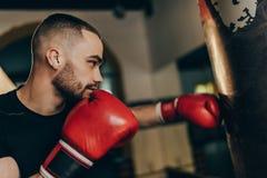 bokser zdjęcie royalty free