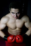 bokser obraz royalty free