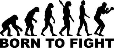 Bokser ewolucja Urodzona Walczyć ilustracji